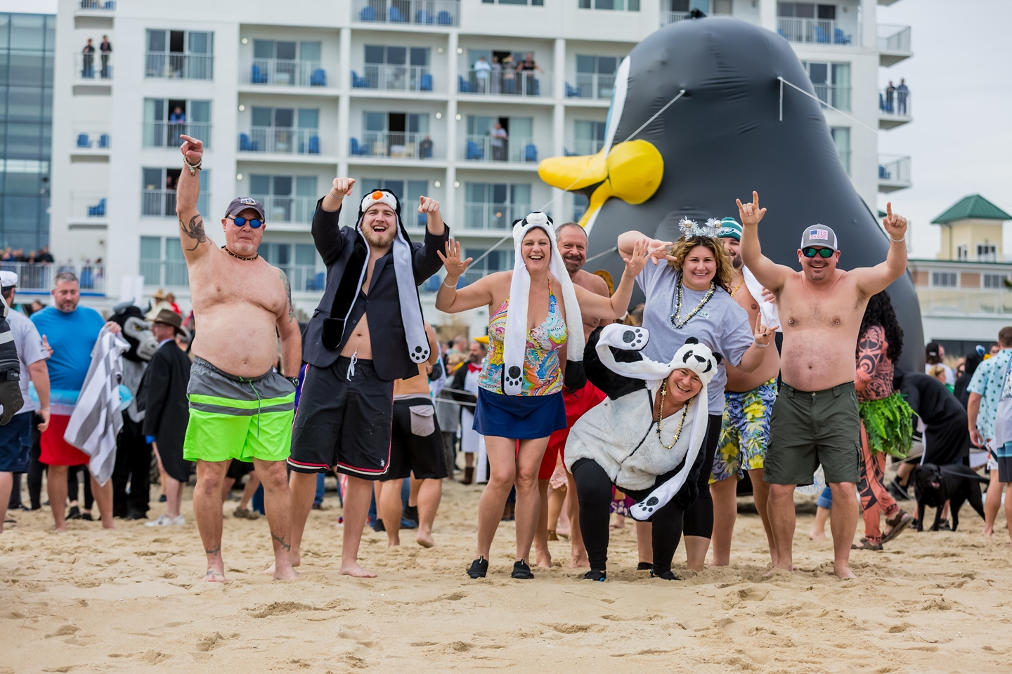 penguin-swim_img_9807_01_01_2019